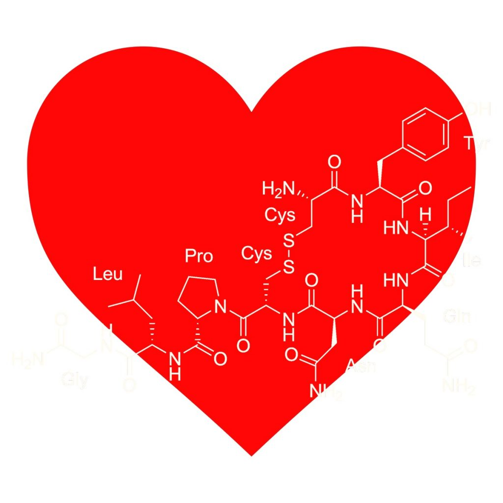 About OxytocinThe'Cuddle Hormone'